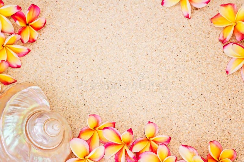Havsskal- och frangipaniblommor på sand, bästa sikt, sommarconce royaltyfria foton