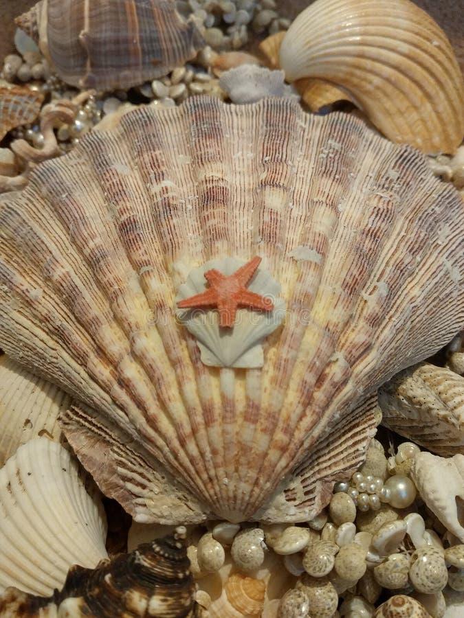 Havsskal och sjöstjärna royaltyfri foto