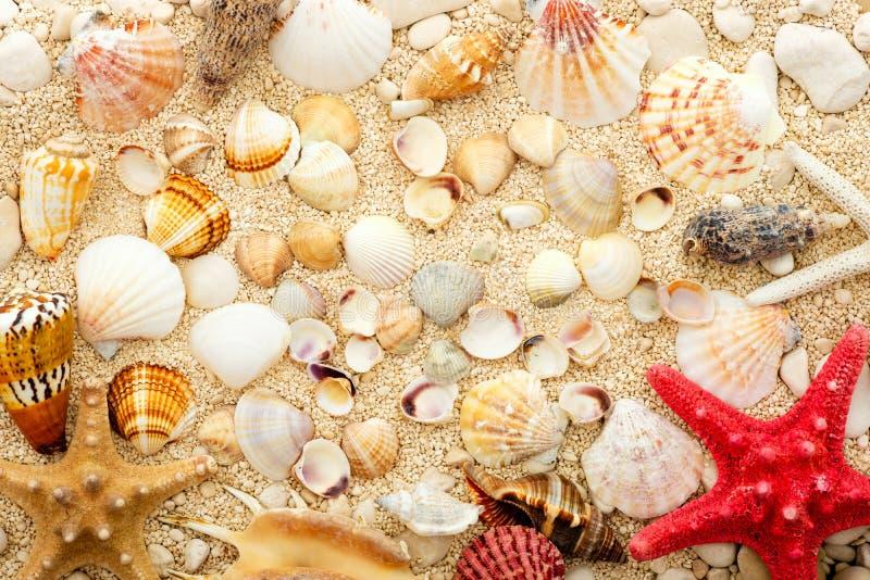 Havsskal och sjöstjärna på den kust- sanden arkivfoton