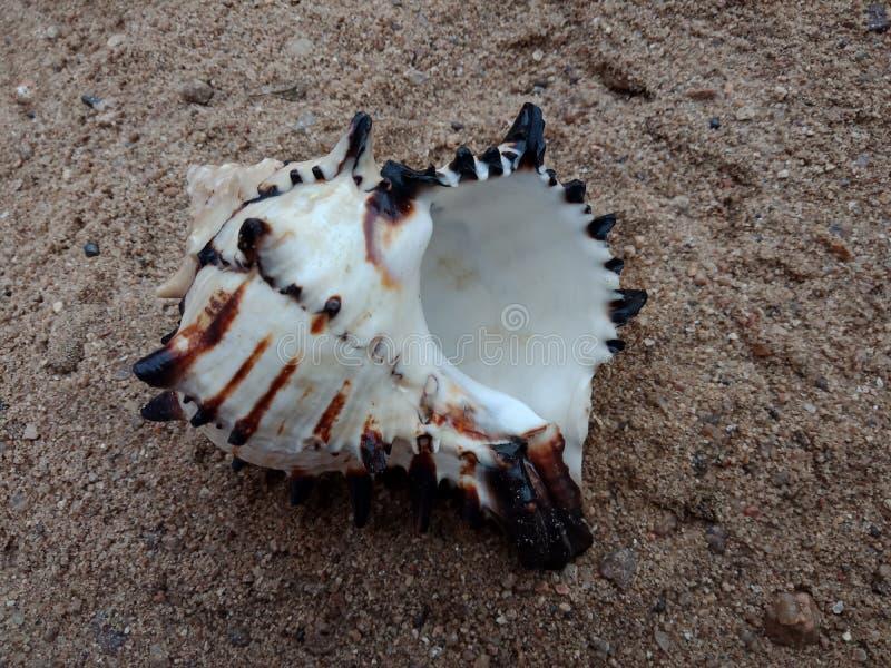 Havsskal på den sand texturerade bakgrundstapeten, royaltyfri fotografi