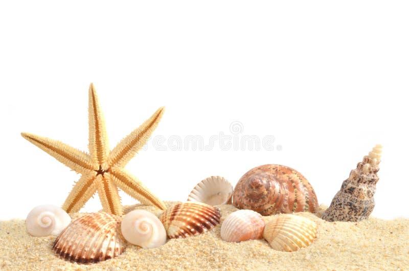 Havsskal på sand royaltyfria foton