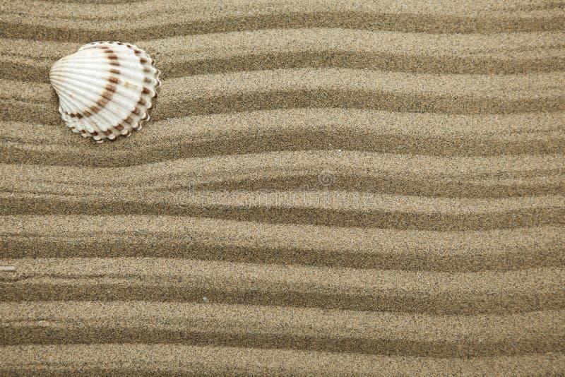 Havsskal på torr sand med vågor royaltyfria foton