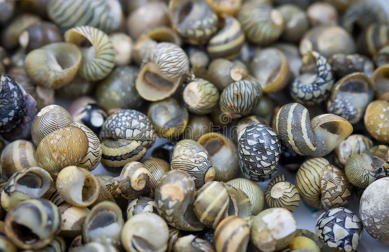 Havsskal samlade på kusten av Thailand royaltyfria foton