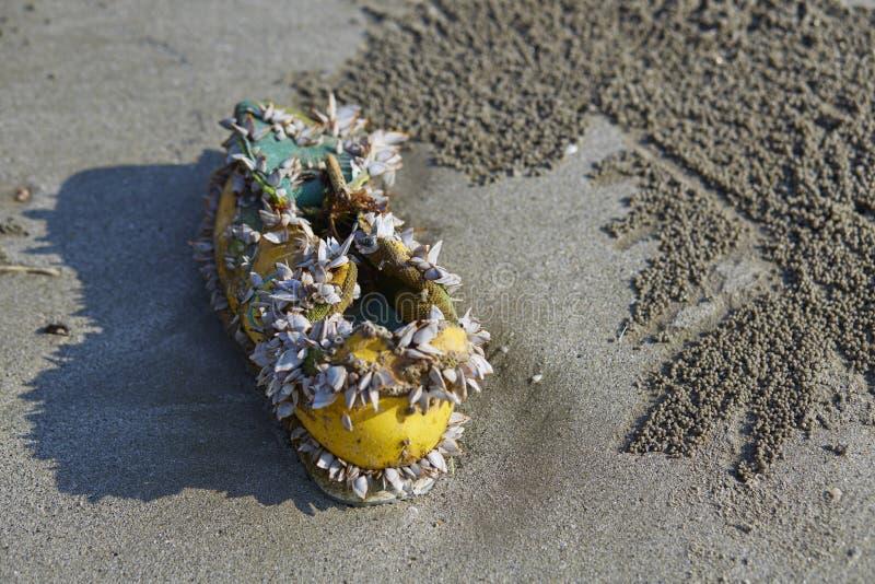 Havsskaltillväxt på skon, strandförorening arkivbilder