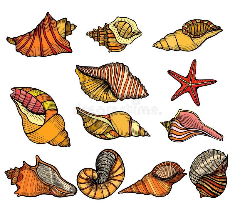 Havsskaluppsättning vektor illustrationer