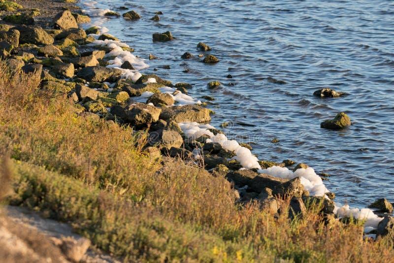 Havsskum på vaggar på Bolsa Chica Wetlands fotografering för bildbyråer