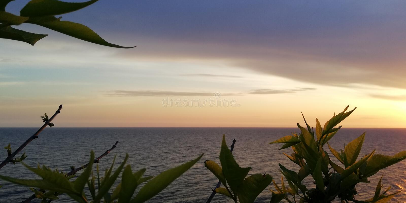 Havssolnedgånglandskap i blåa och rosa signaler mot bakgrunden av а sidor av träd arkivbild