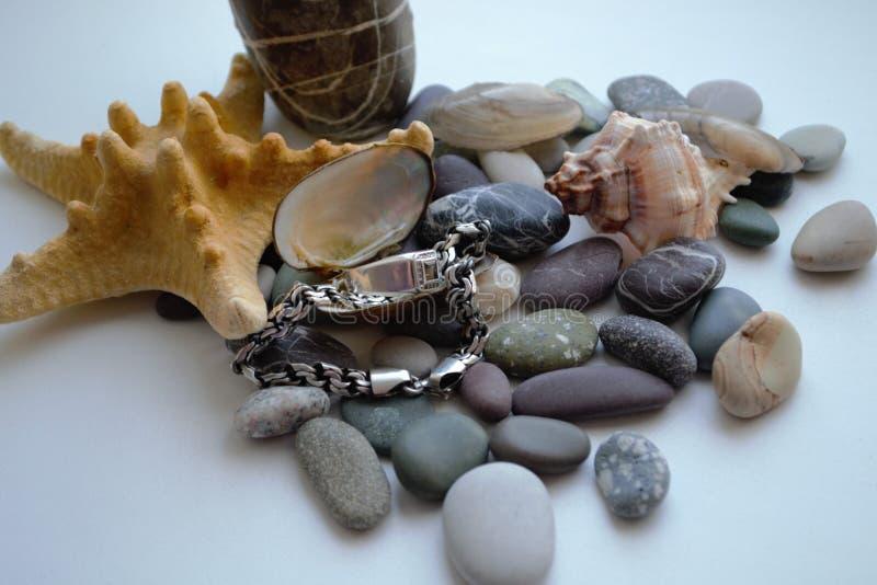 Havsstenar, snäckskal och silver på en vit bakgrund arkivfoton