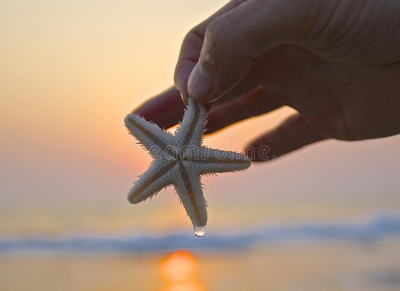 Havsstjärna på handen med strandbakgrund i Indien fotografering för bildbyråer