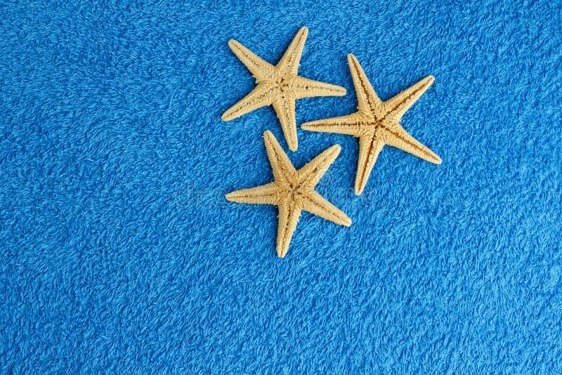 Havsstjärnor arkivbild