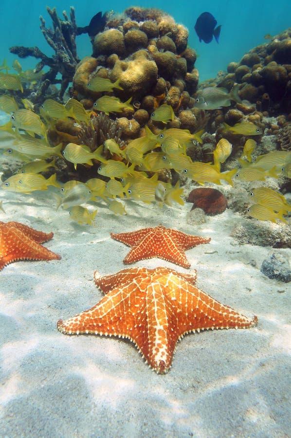 Havsstjärnor i en korallrev royaltyfri bild