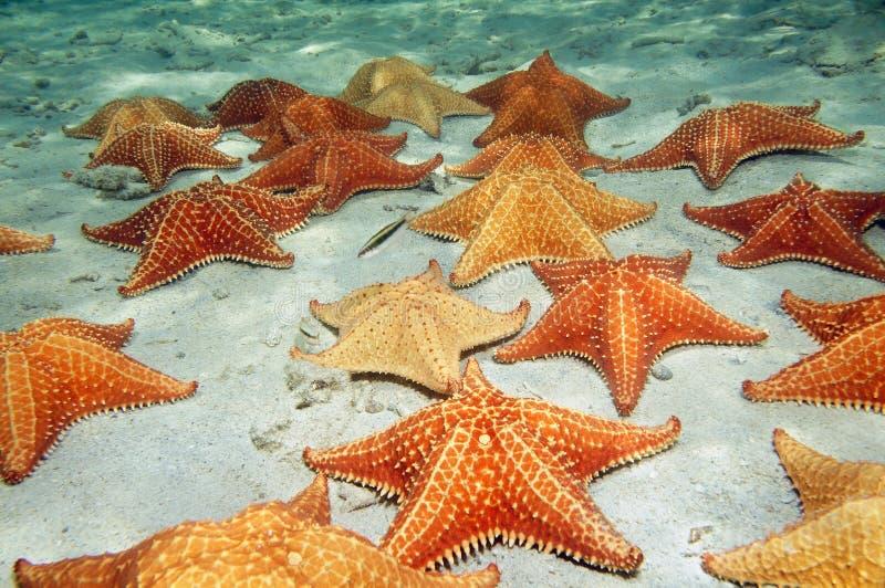 Havsstjärnor på sandigt havgolv royaltyfria foton