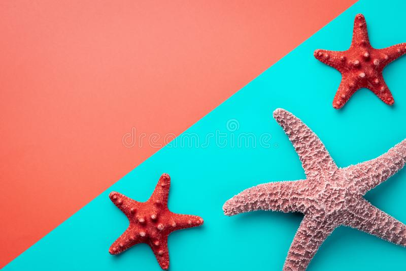 Havsstjärnor som är stora och som är små mot bakgrunden av en korall- och akvamarinfärg som diagonalt delas med kopieringsutrymme arkivbilder