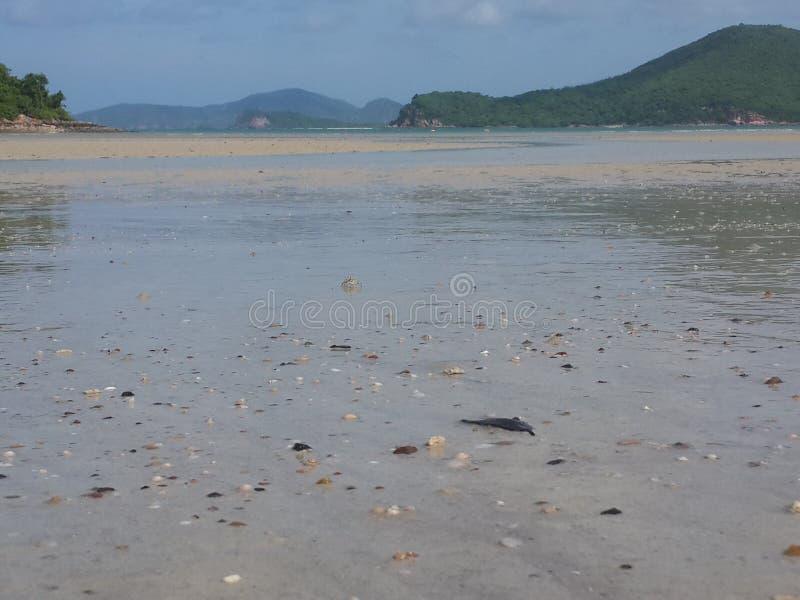 Havsstränder arkivfoton