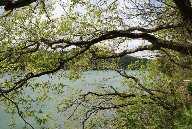 Havsträd fotografering för bildbyråer