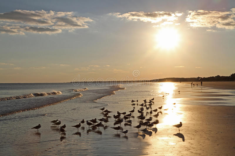 Havstrand på solnedgången arkivfoto