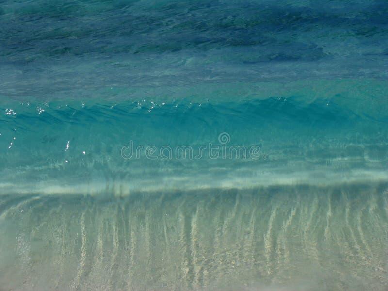 havsturkos fotografering för bildbyråer