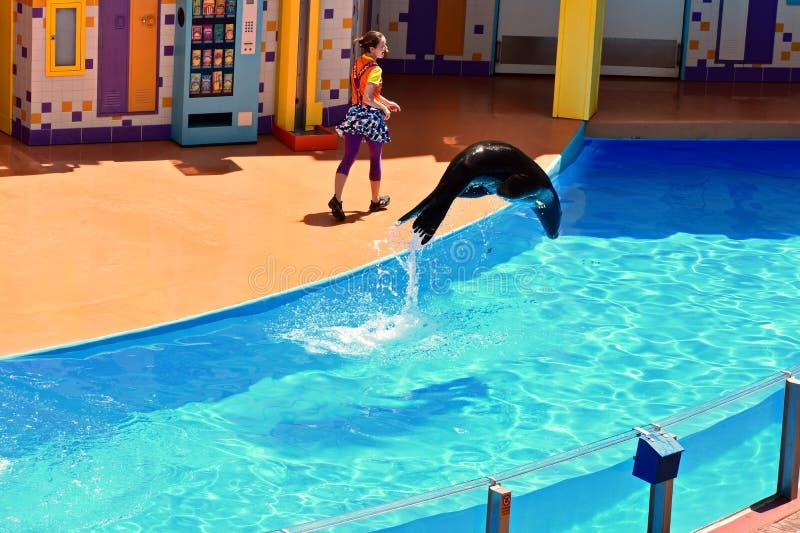 Havsvärlden är ett djurt nöjesfält, oceanarium, och det marin- däggdjuret parkerar royaltyfri foto