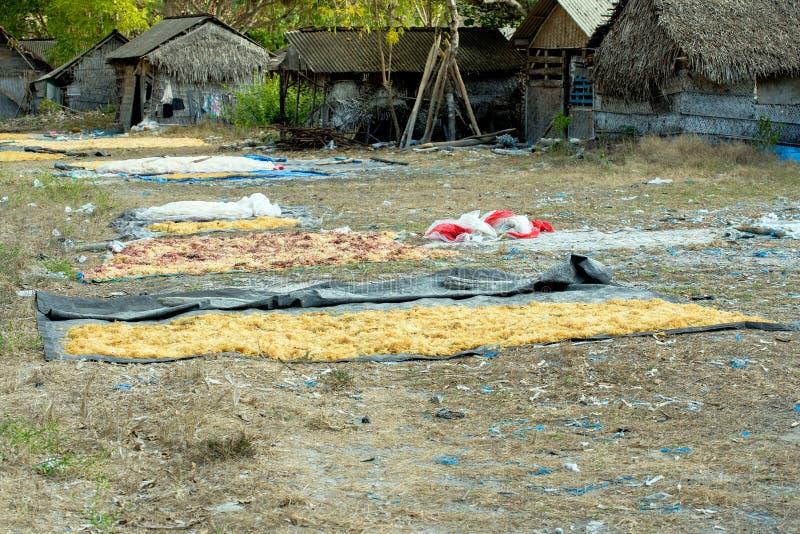 Havsväxt brukade längs kusten av Nusa Penida arkivfoto