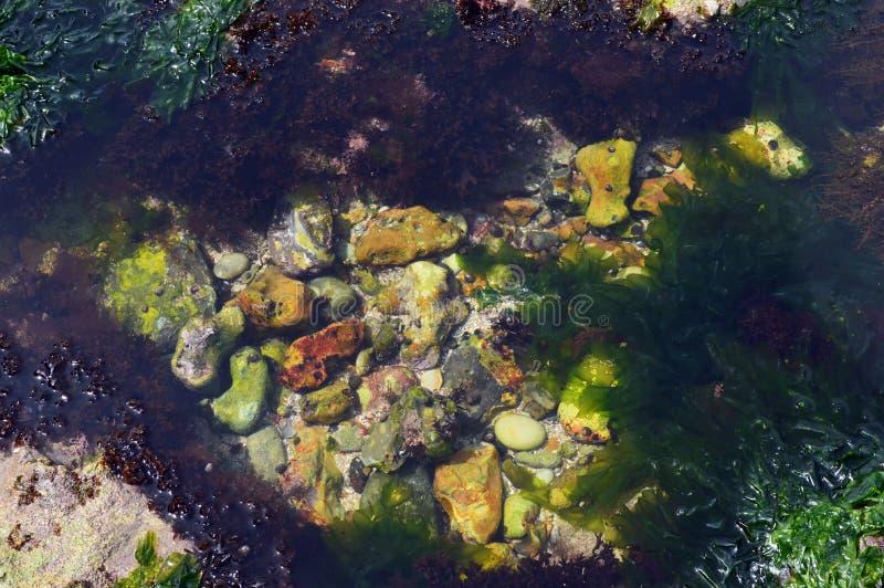 Havsväxt på stranden arkivfoto
