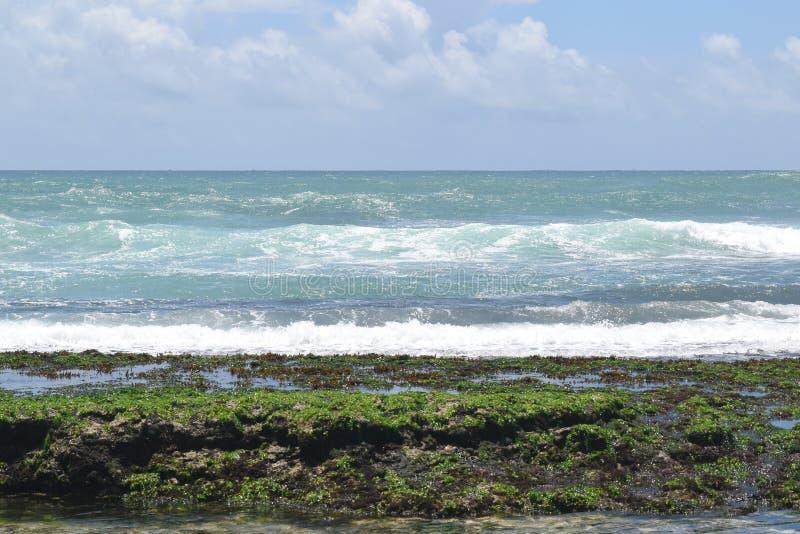 Havsväxter med rent blått vatten arkivbild