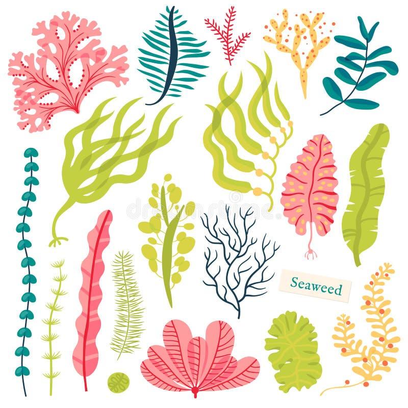 Havsväxter och vatten- marin- alger Fastställd vektorillustration för havsväxt som isoleras på vit vektor illustrationer