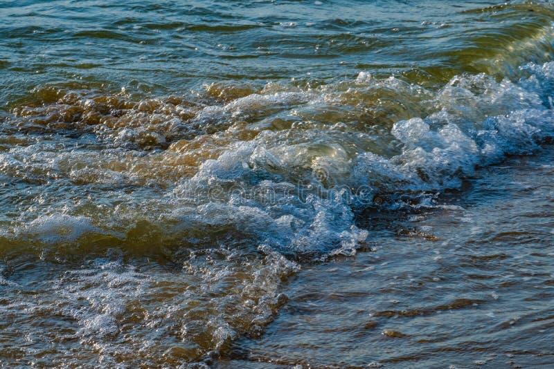 Havsv?g p? stranden arkivfoton