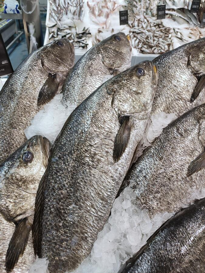 Havsvikt som visas i fiskräknare fotografering för bildbyråer
