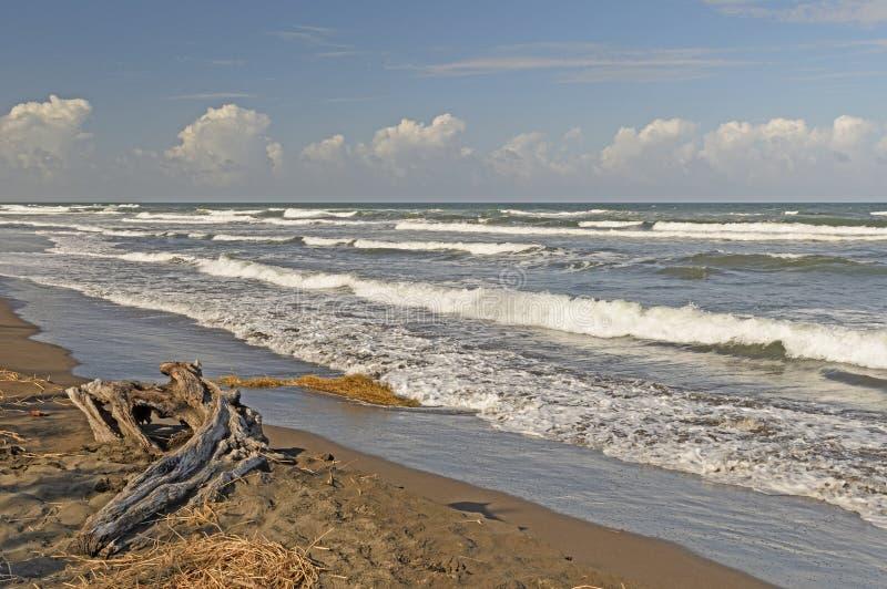 Havvågor på en avlägsen kust royaltyfri foto