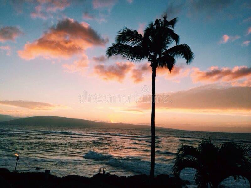 hawaï stock foto