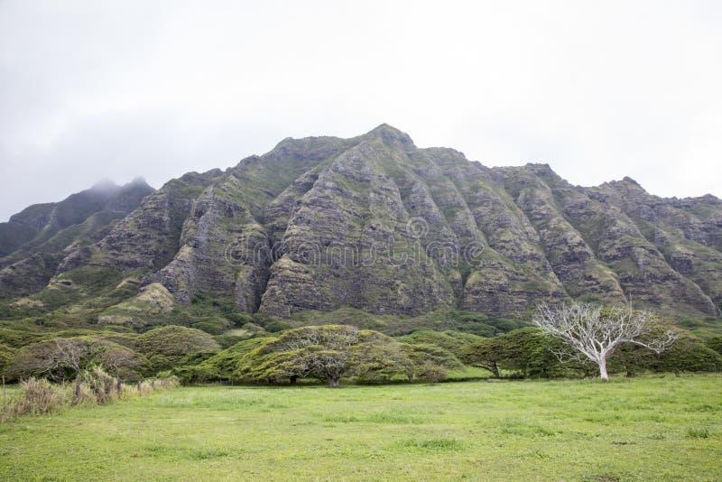 Hawaiansk bergssida royaltyfri bild
