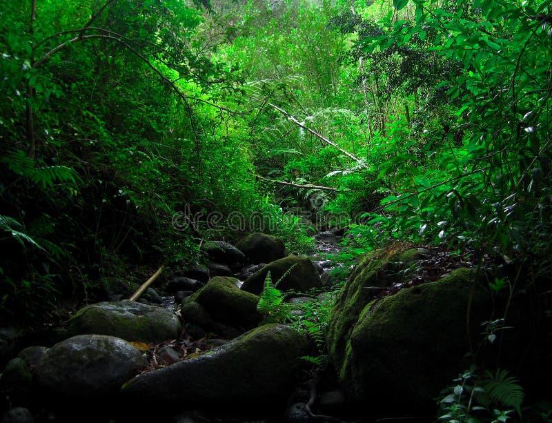 hawaiansk djungel arkivbilder