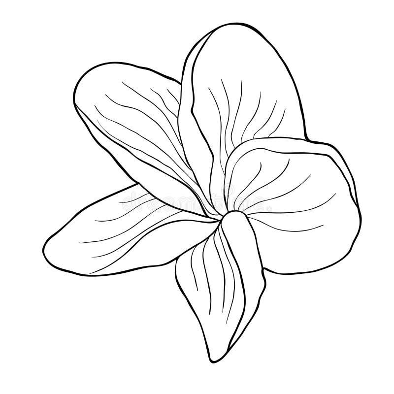 Hawaiansk plumeriablomma för färgläggning ett exotiskt också vektor för coreldrawillustration stock illustrationer
