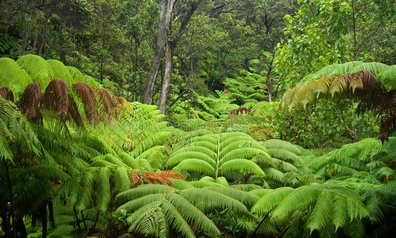 hawaiansk rainforest arkivbilder
