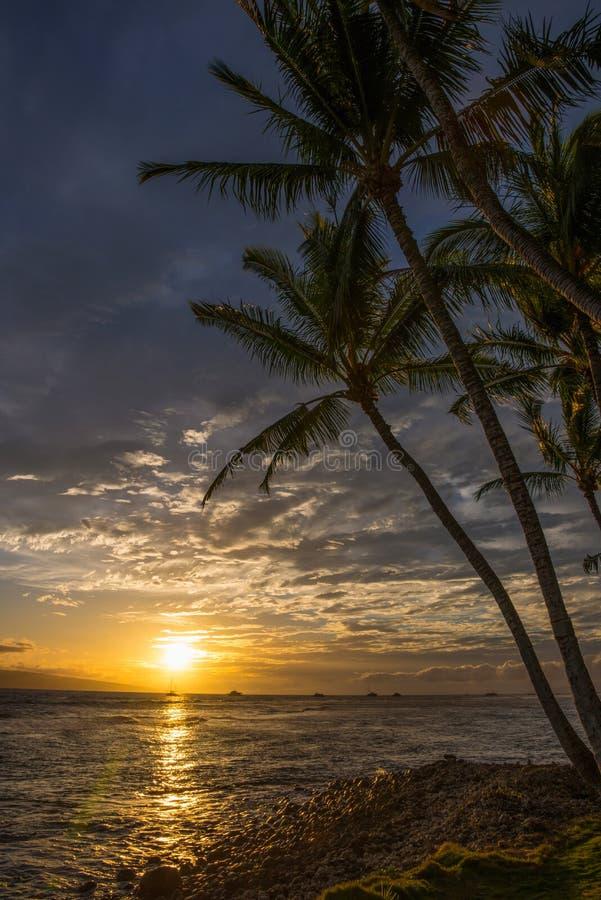 Hawaiansk solnedgång och palmträd arkivbild