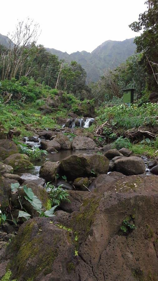 Hawaianska strömmar arkivbilder