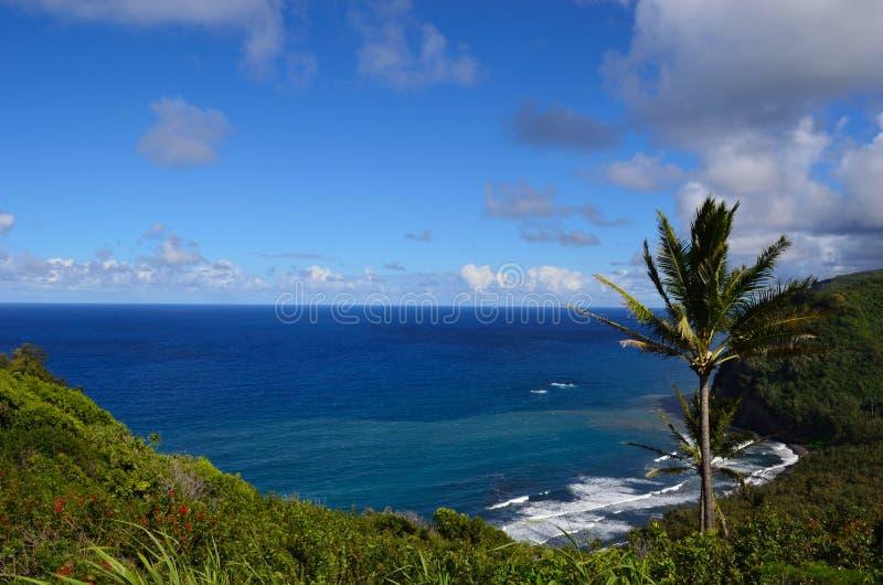 Hawaii_beach_palm_1 免版税库存照片