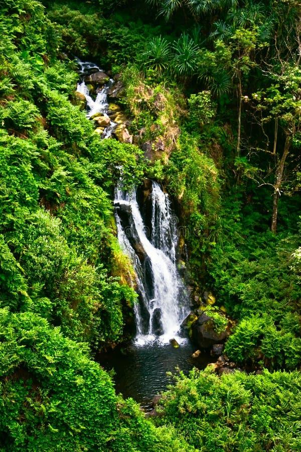 hawaii djungelvattenfall royaltyfri foto