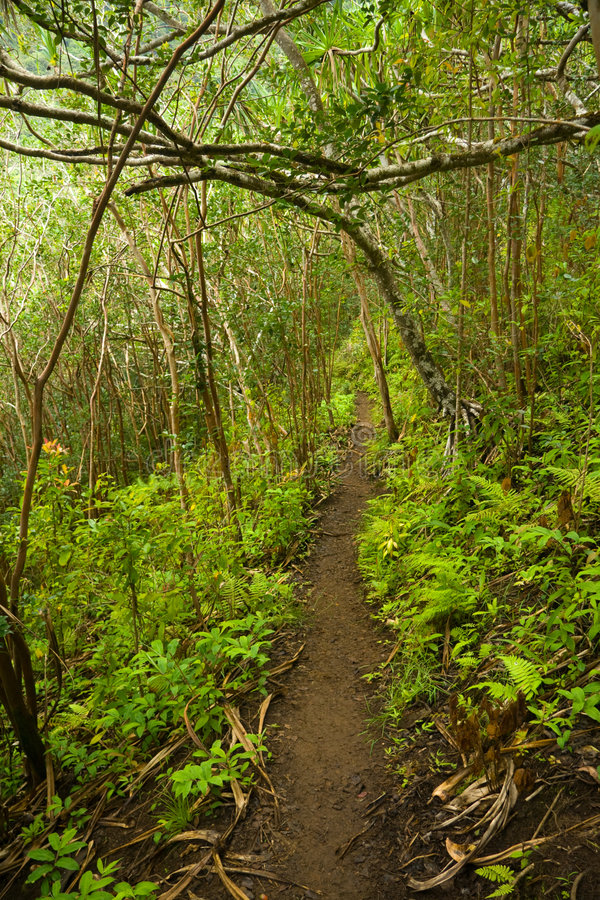 Download Hawaii Hiking stock photo. Image of mountain, leaves, plants - 2783684