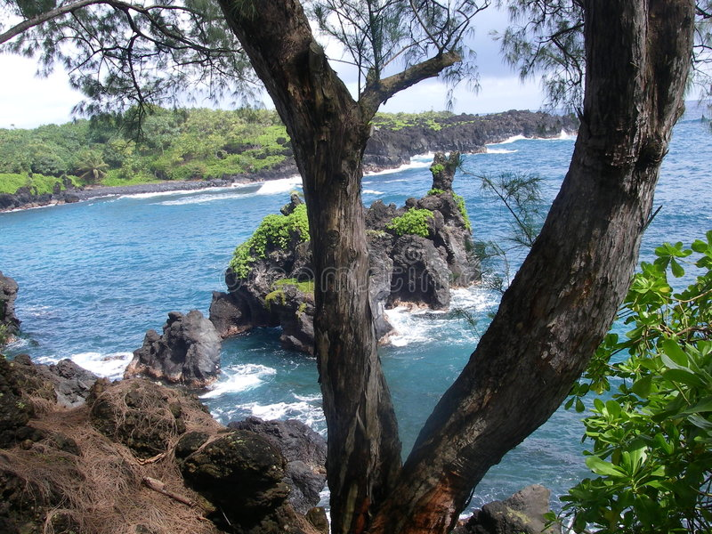 Hawaii-Ozeanszene durch Bäume stockbilder