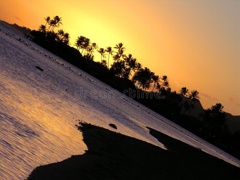 hawaii sunset palm oceanu obrazy royalty free