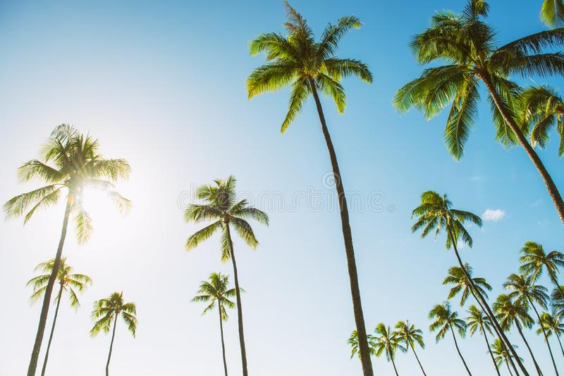 Hawaii tall palm trees with sun flare against blue sky summer travel background USA vacation stock photography