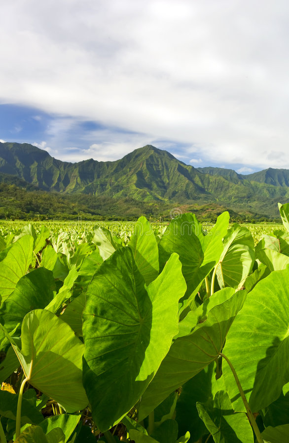 hawaii vildmark royaltyfri bild