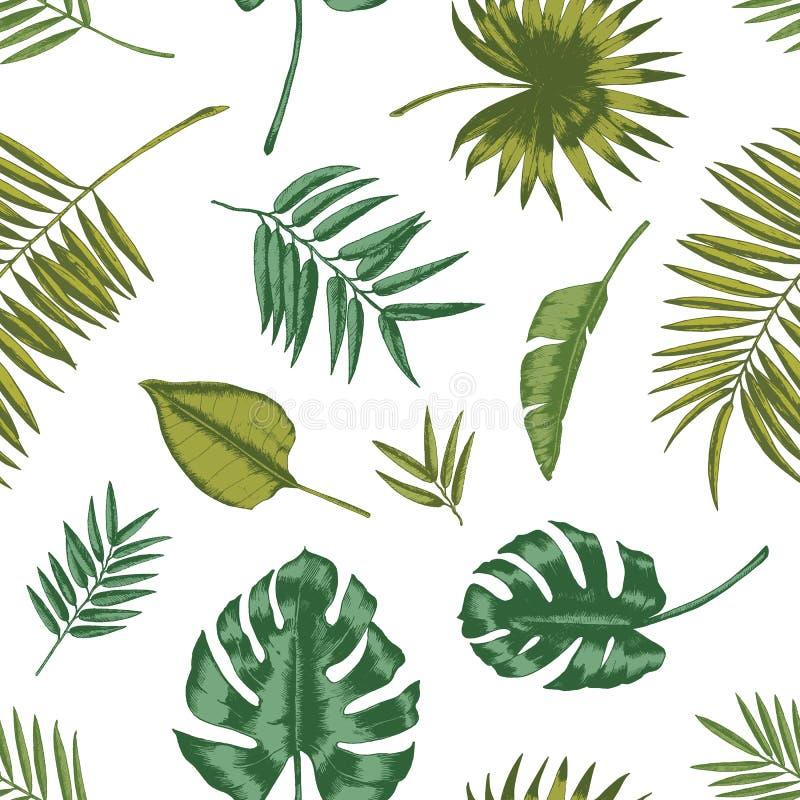 Hawaiiaans naadloos patroon met tropisch gebladerte op witte achtergrond Natuurlijke achtergrond met groene bladeren van exotisch vector illustratie