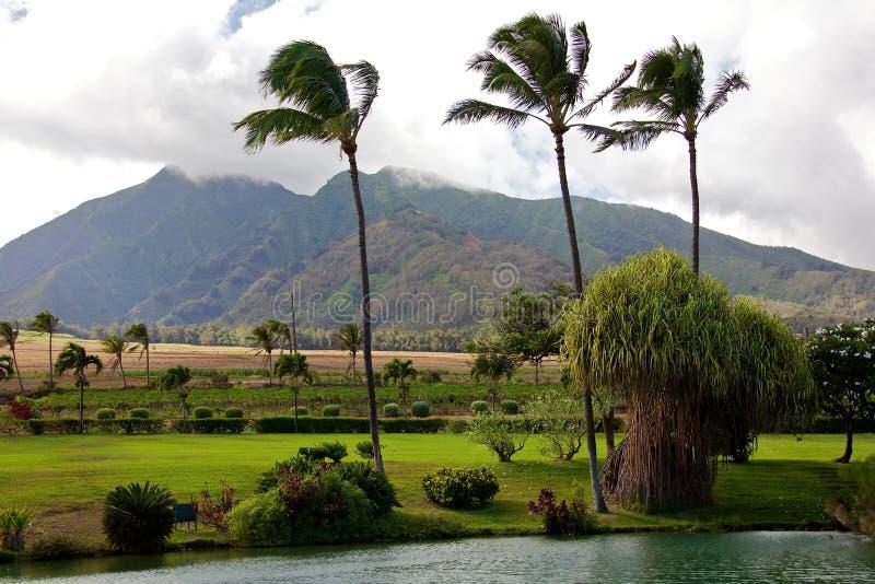 Hawaiiaanse aanplanting royalty-vrije stock afbeelding