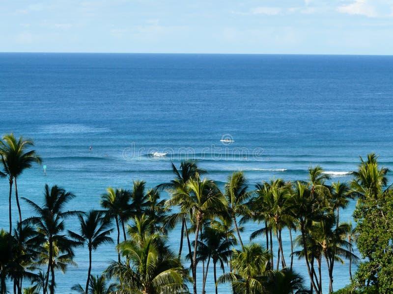 Hawaiiaanse scènebomen en oceaan royalty-vrije stock afbeelding