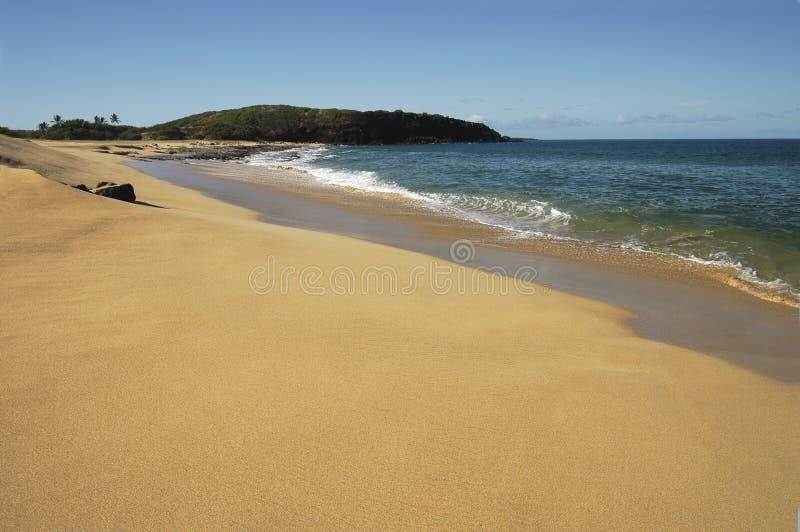 hawaiian красотки пляжа стоковые изображения
