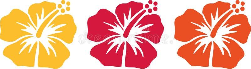 Hawaiian flowers - hibiscus blossoms stock illustration