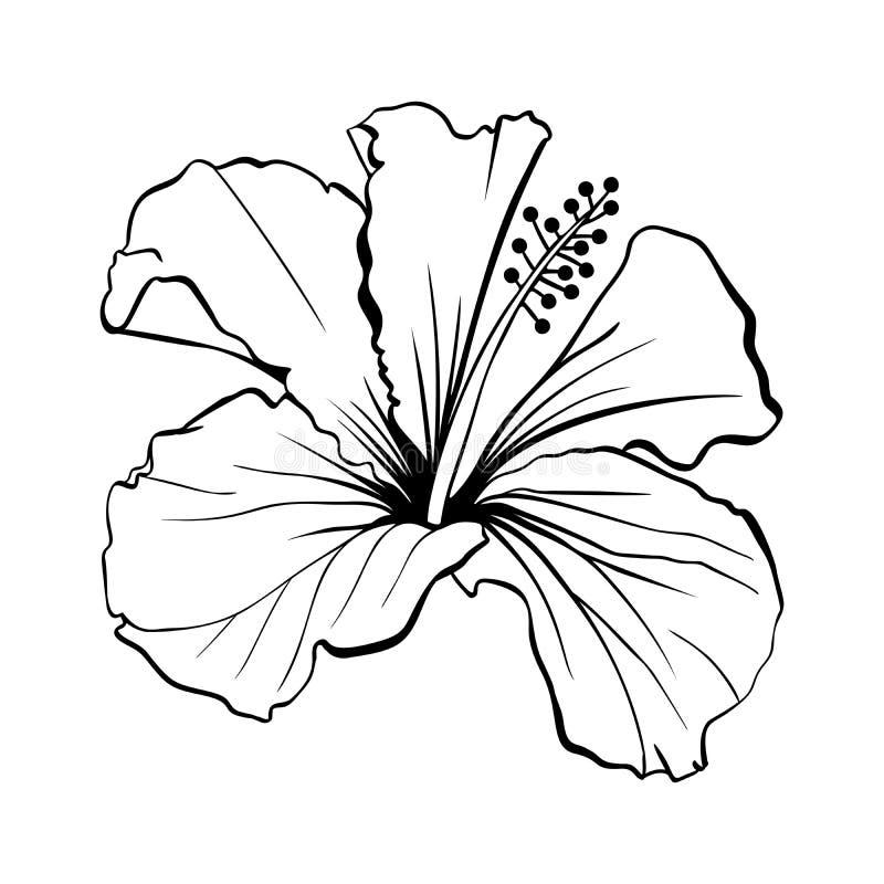 Free Hawaiian Hibiscus Outline Laser Cut Vector. Royalty Free Stock Photos - 132840578