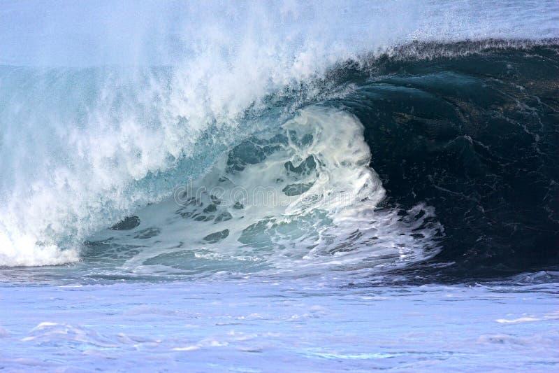 Hawaiian Northshore Wave royalty free stock photo